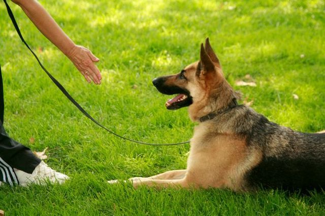 Ask the trainer: teaching your dog any obedience command