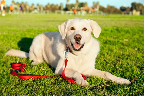 Ask the trainer: teaching your dog to stay