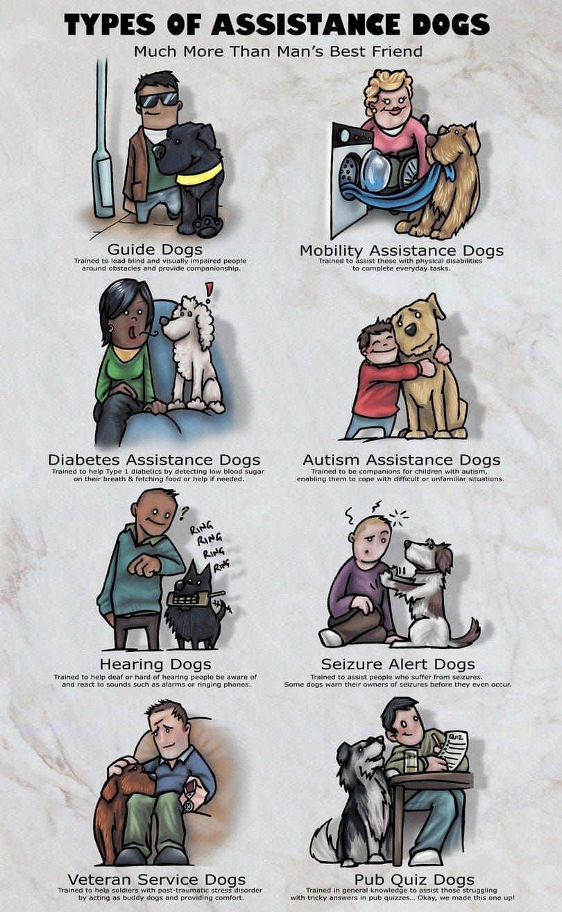 Assistance dogs infographic