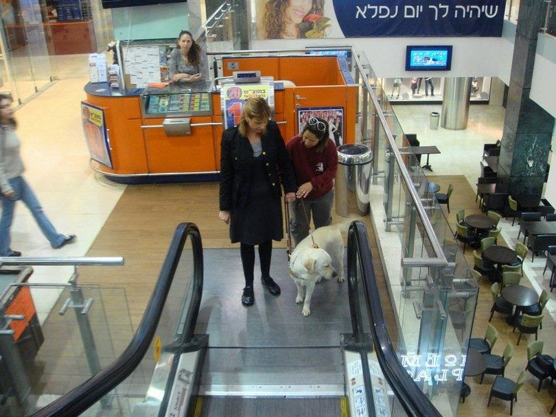 Assistance dog going with woman on escalator