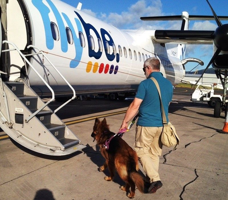 Assistance dog going into a airplane cabin