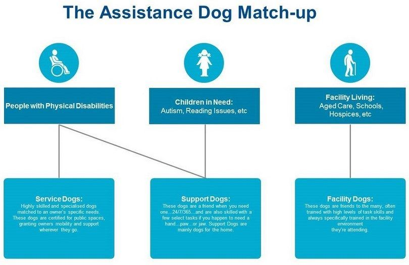 Assistance dog match up
