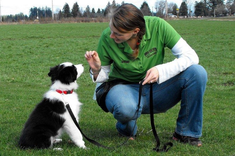 Basic dog commands: canine boot camp