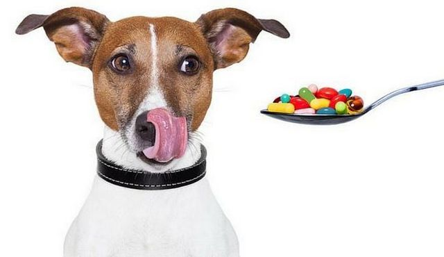 Benadryl for dogs: a good idea?