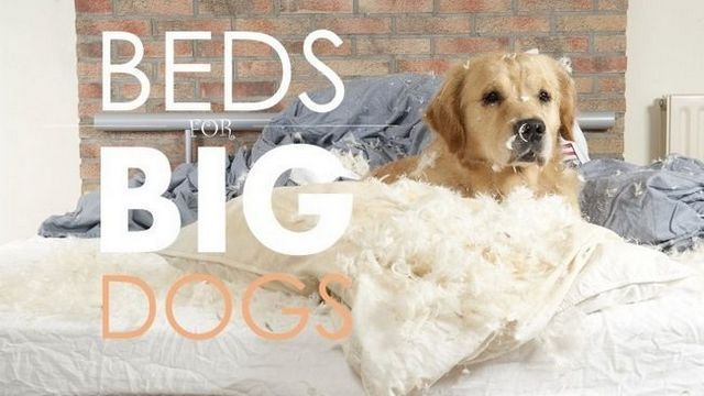Best dog beds for large dogs: guide & recommendations