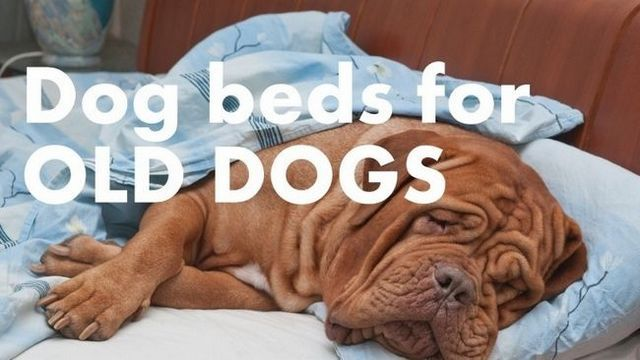 Best dog beds for older dogs: keeping your companion comfy