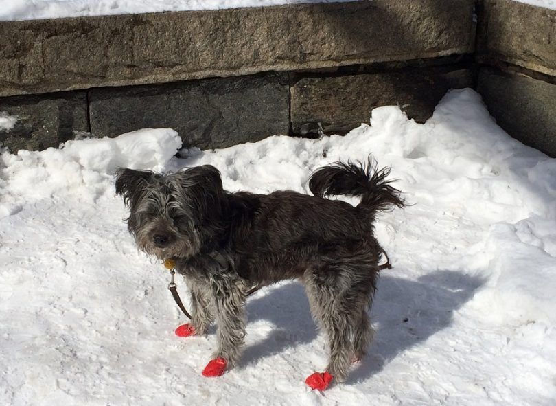 Best dog booties for snow: keeping your best friend warm and comfortable