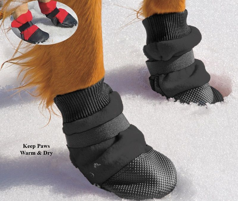 Dog paws with boots
