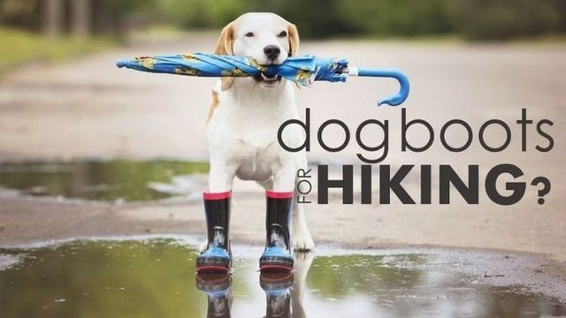 Best dog boots for hiking: avoid painful cuts on your next trek