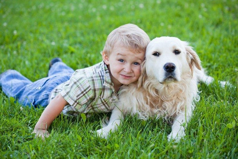 Best dog breeds for kids: what to consider when taking pet for your child