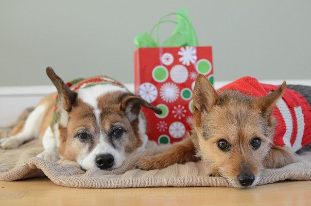 Best Dog Christmas Presents and Gift Ideas