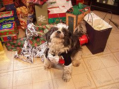 Best Dog Christmas Presents and Gift Idea