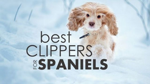 Best dog clippers for cocker spaniels: 5 amazing tools to trim that pup!