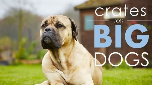 Best dog crates for large dogs: 5 big, comfy ones