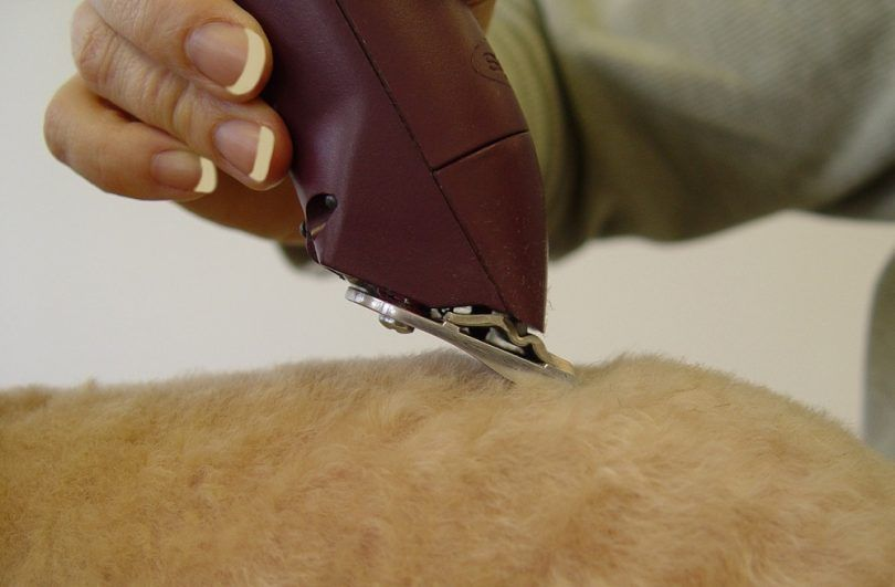 Best dog grooming clippers: how to make grooming a fun experience