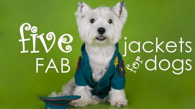 Best dog jackets: 5 stylish & practical (second) coats