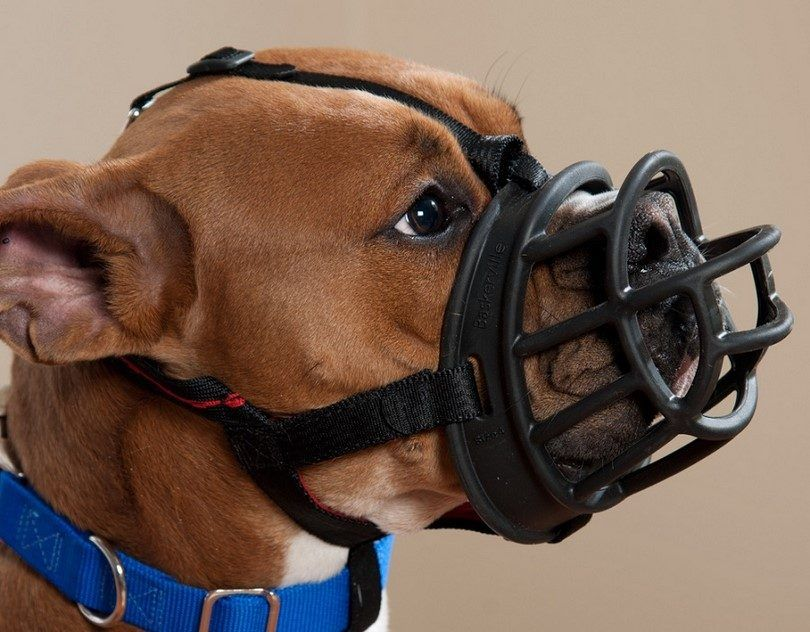Best dog muzzle: how to choose a product for your dog's needs