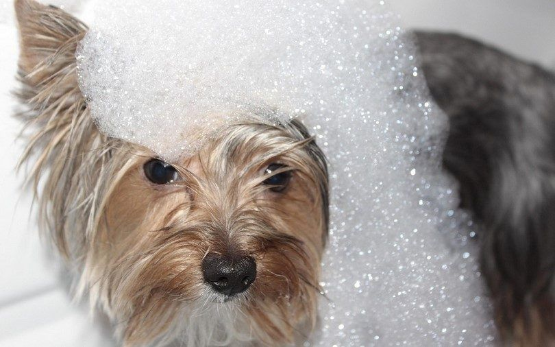Best dog shampoo: keep your pet clean and shiny