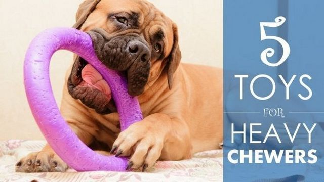 Best dog toys for heavy chewers: 5 durable choices (& a bit of advice…)