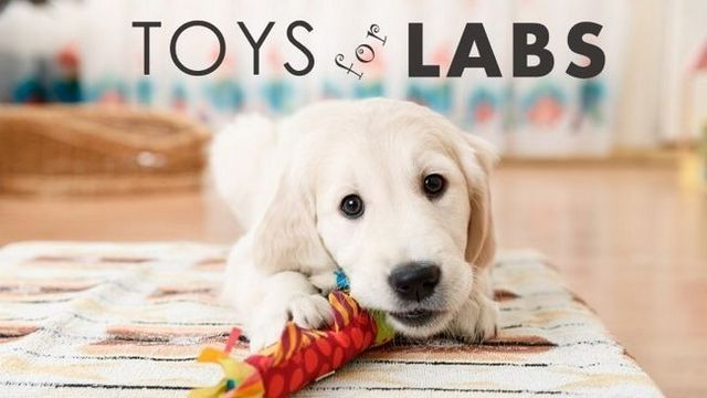 Best dog toys for labs: quality tough toys for bored labs