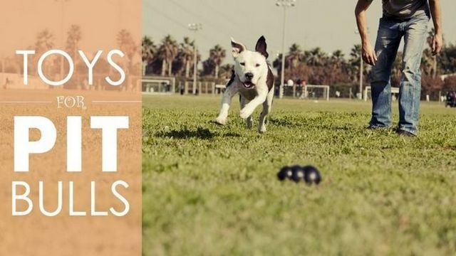 Best dog toys for pit bulls: 5 strong toys than can stand up to your pit's punishment