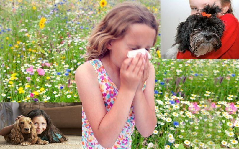 Best dogs for kids with allergies: which breed to choose?
