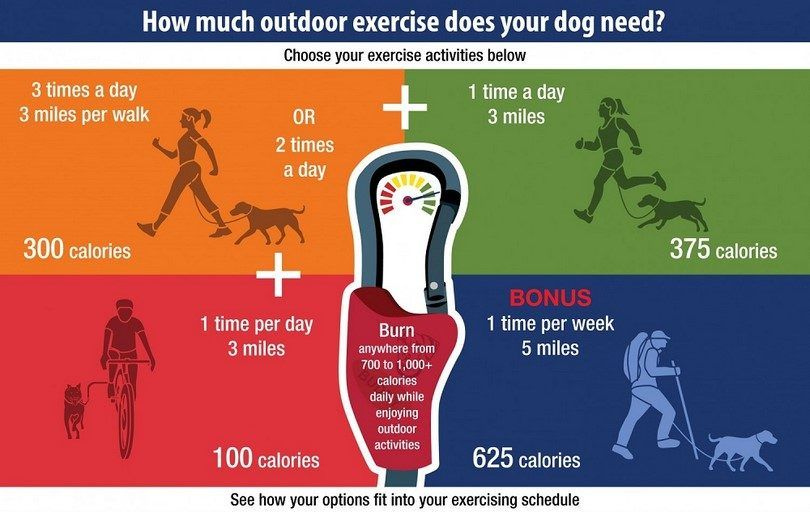 Outdoor exercise for your dog