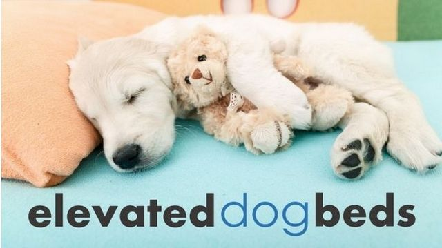 Best elevated dog beds: 5 great options + reviews
