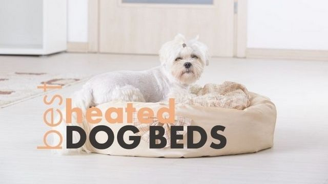 Best heated dog beds: 4 warm & cuddly beds for your pup