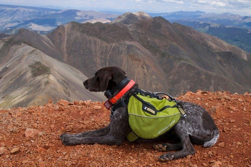 Dog for hiking
