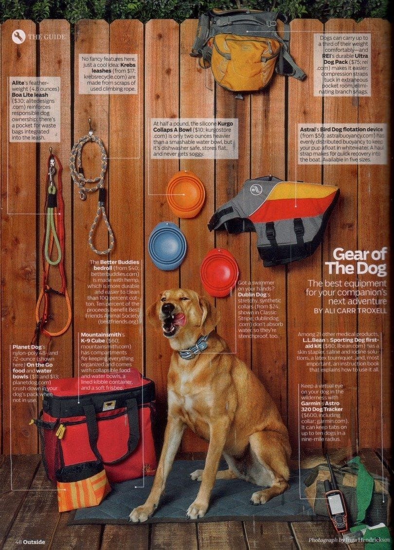 Dog gear for hiking