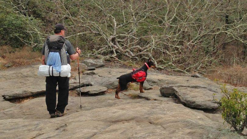 Hiking Doberman Pinscher