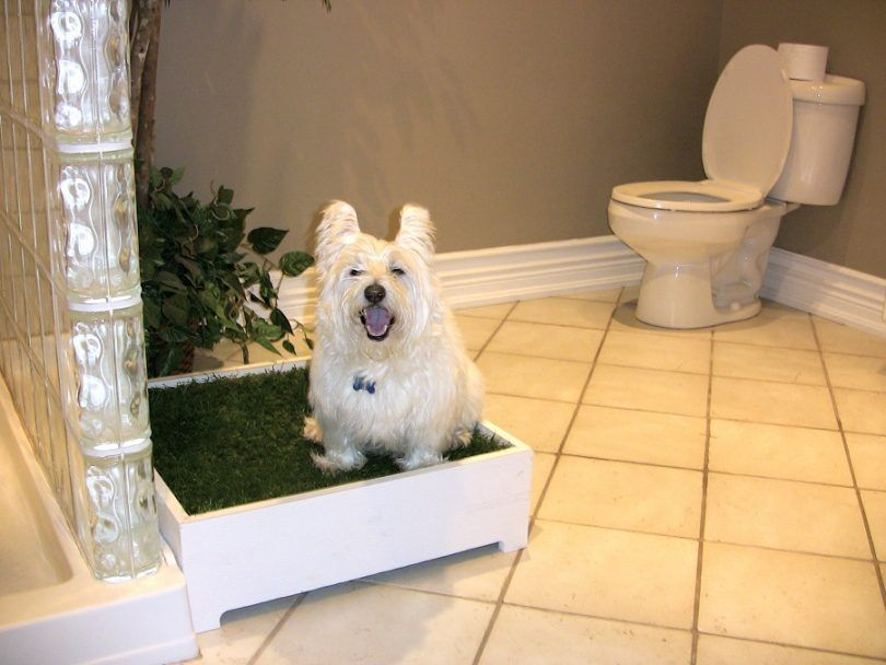 Best indoor dog potty: a review of the best indoor dog potty designs