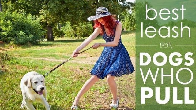 Best leash for dogs that pull: 5 great options to reign in an over-eager dog