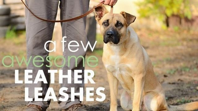 Best leather dog leashes: 5 luxurious & sturdy options