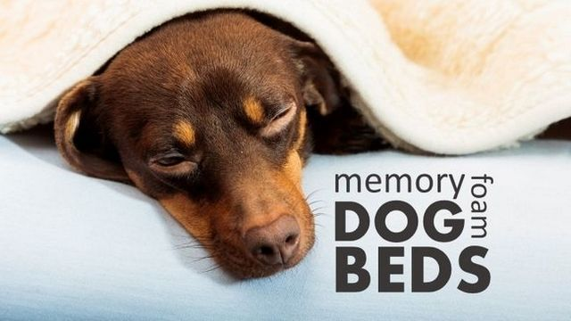 Best memory foam dog beds: 4 comfy sleep stations for your pup