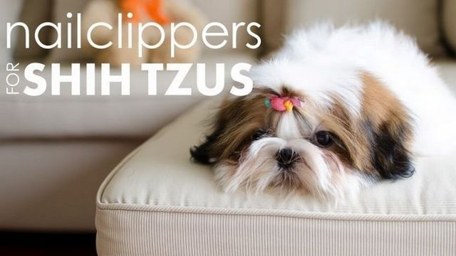 Best nail clippers for shih tzu's: protect your pup's paws