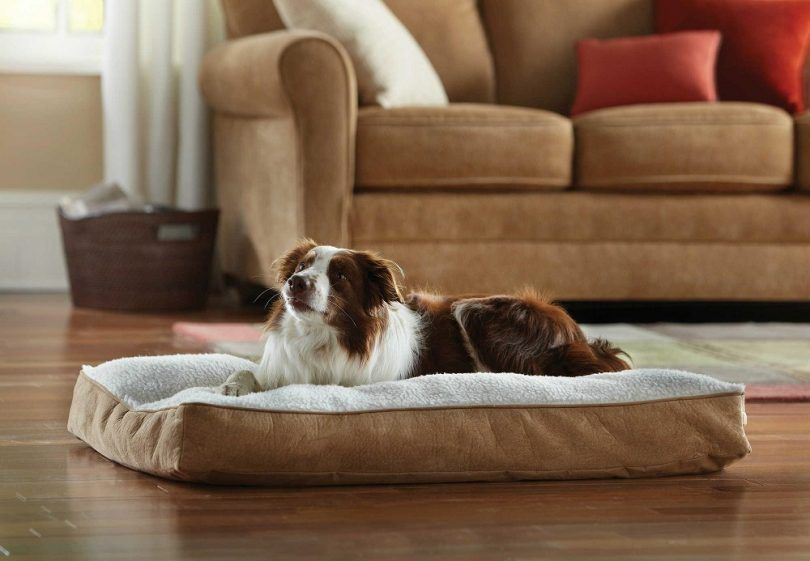 Best orthopedic dog bed: choose the best for your pet