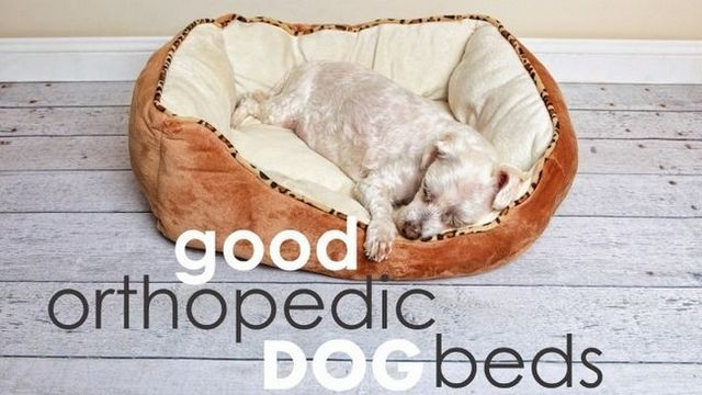 Best orthopedic dog beds (large dogs will love these…)
