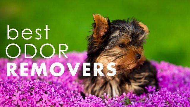 Best pet odor neutralizers: get rid of odors for good!