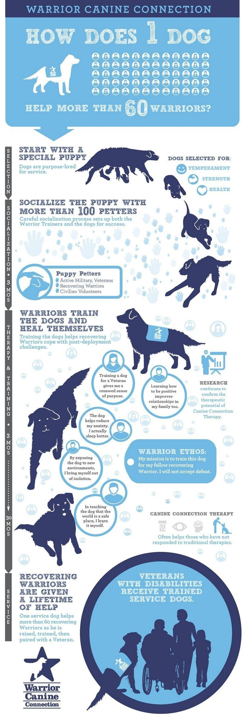 One dog help many infographic