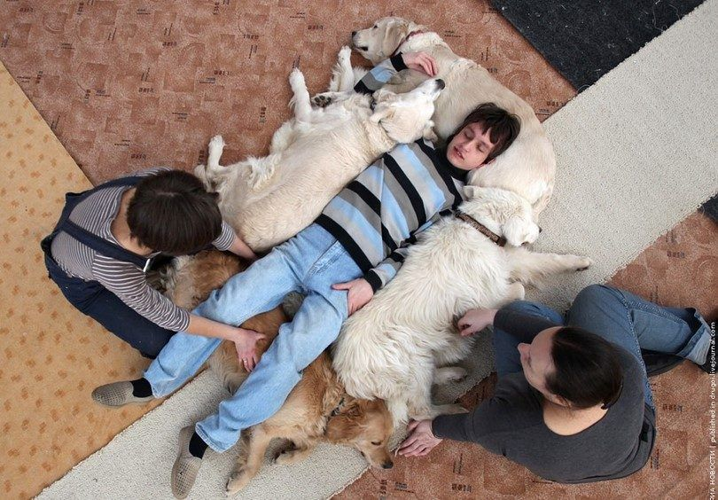 Therapy dogs helping boy