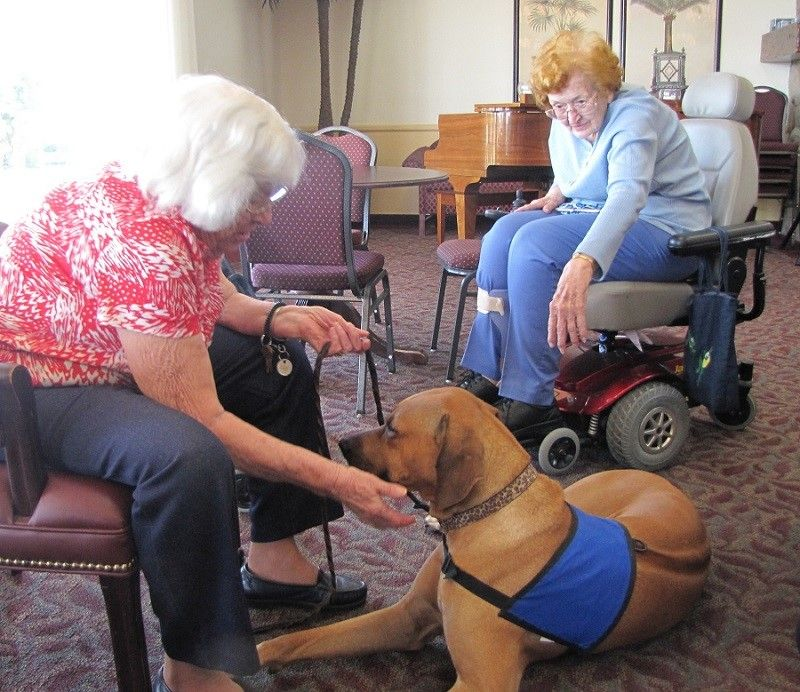 Therapy dog with seniors