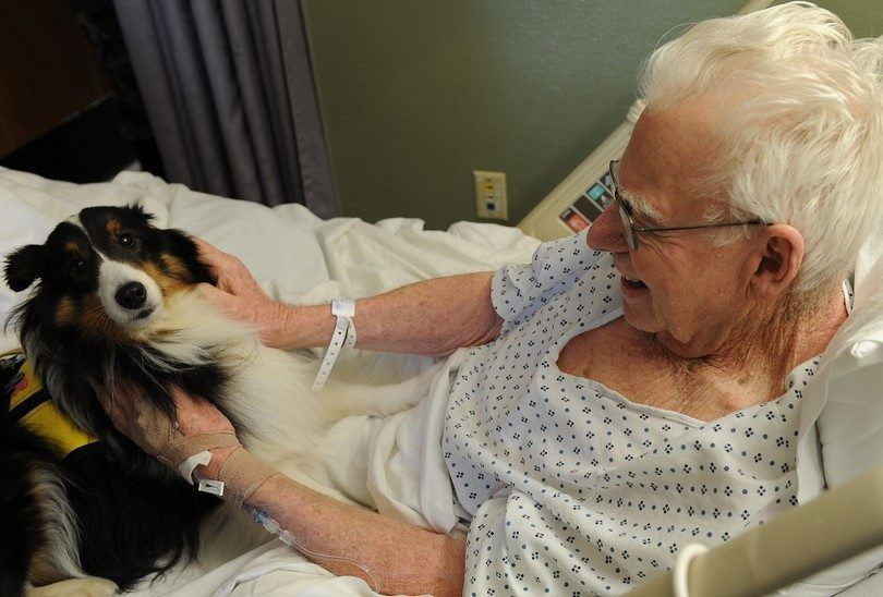 Collie therapy dog