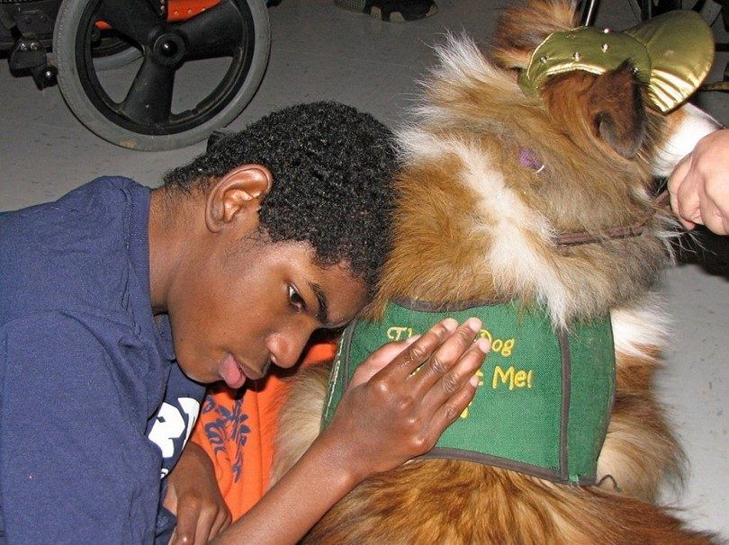 Therapy dogs helping one in need