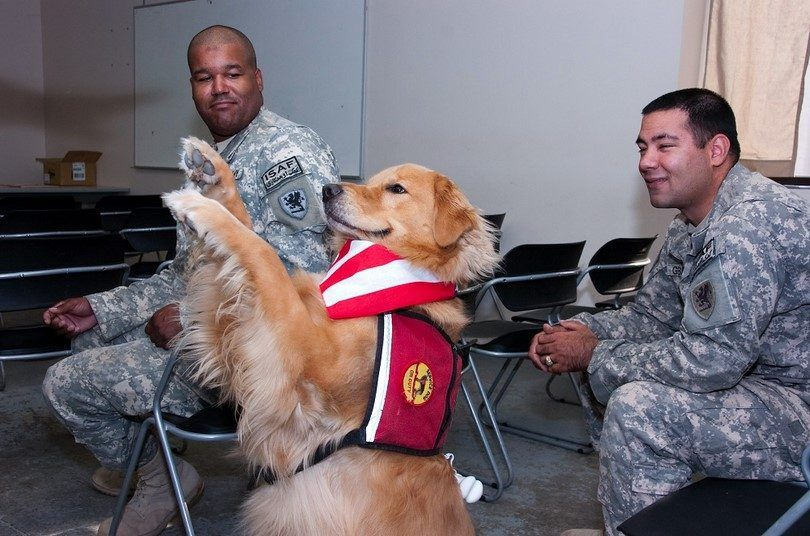 Dogs healing power