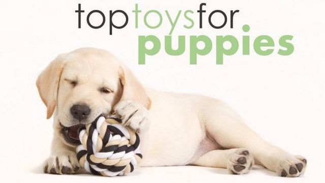 Best toys for puppies: help them get out that energy!