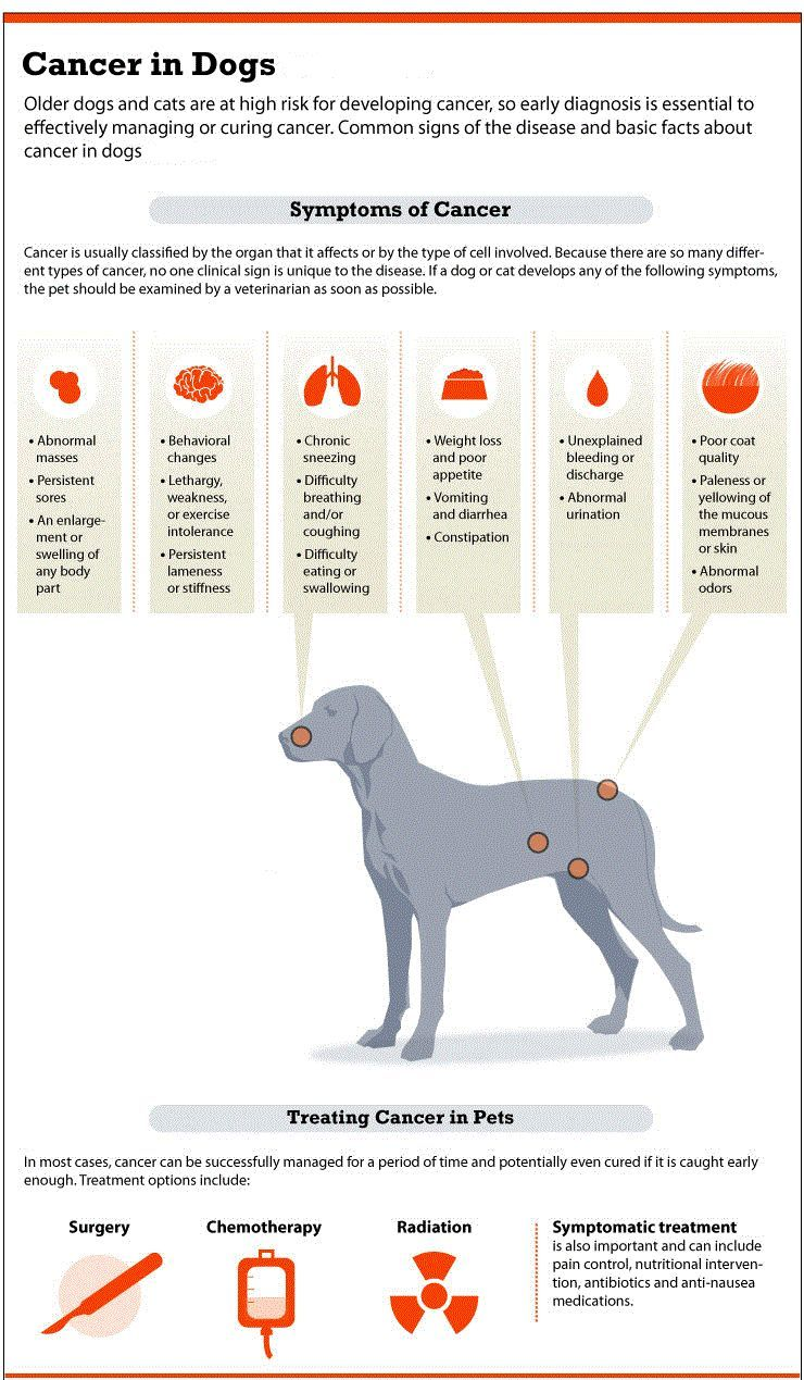 Cancer signs in dogs