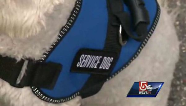 Boston bombing survivor & her service dog kicked out of tj maxx store