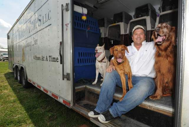 Brave man travels 4,200 miles to transport rescued southern dogs to their new northern homes